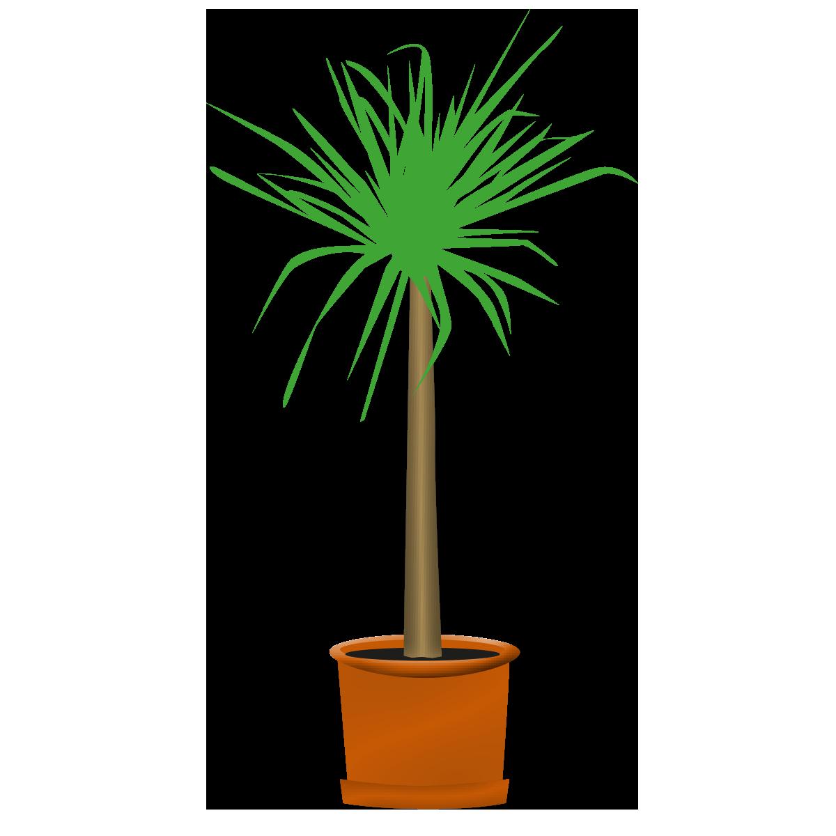 Palmen/Dekopflanzen, lebend 2m++